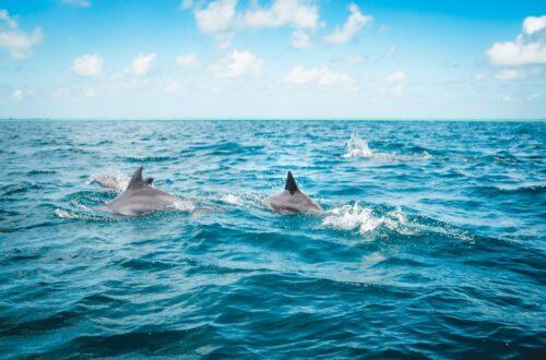 Article : En politique africaine, la meilleure place du dauphin, c'est derrière le requin